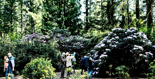 rhododendron-species-symposium-1.jpg